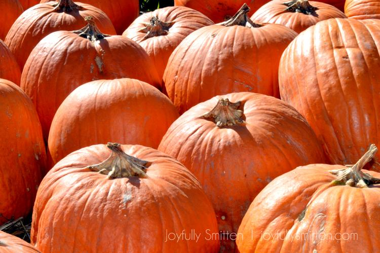 A Day at the Pumpkin Patch 2014