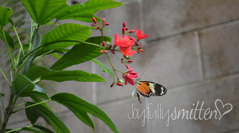 February's Trip to the Butterfly Pavillion