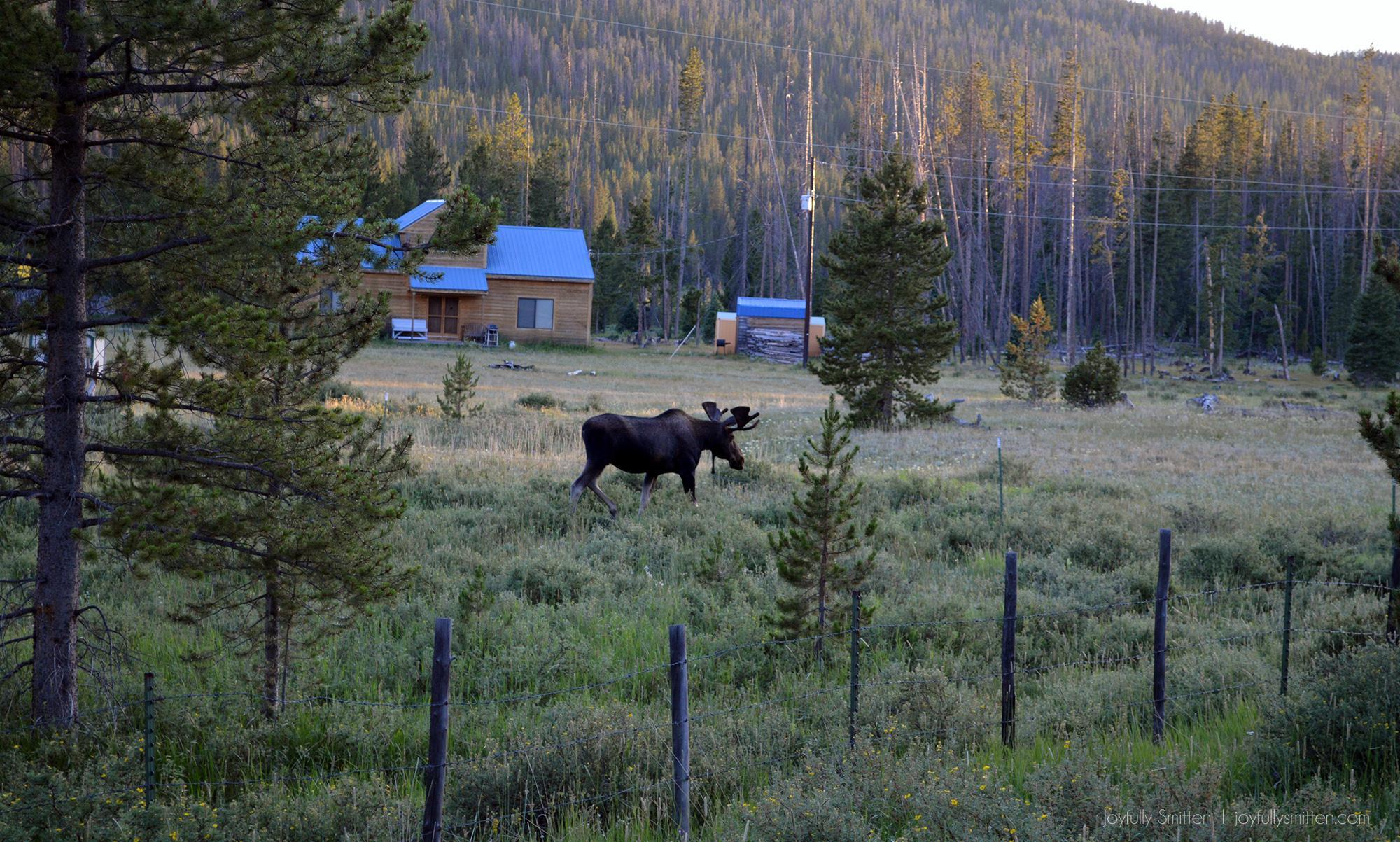 The Moose & Deer Prayer
