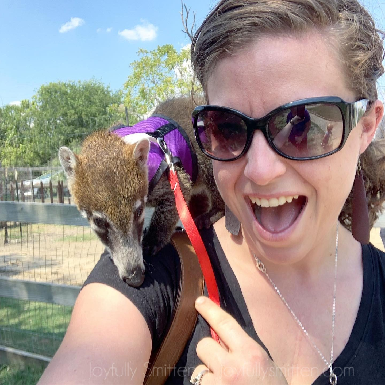 Kangaroos and Coatis -oh my!